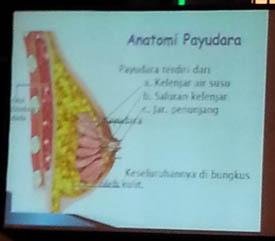 Anatomi payu dara