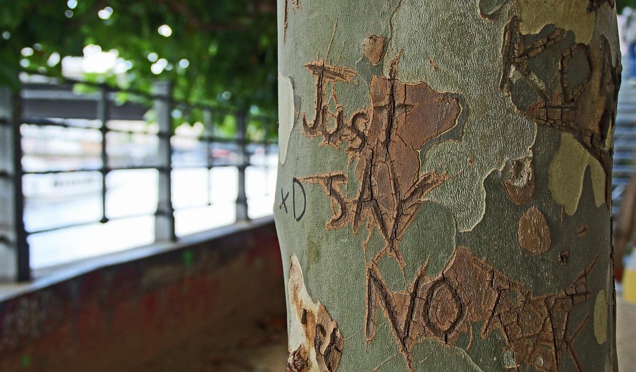 tree-bark-1209874_1280
